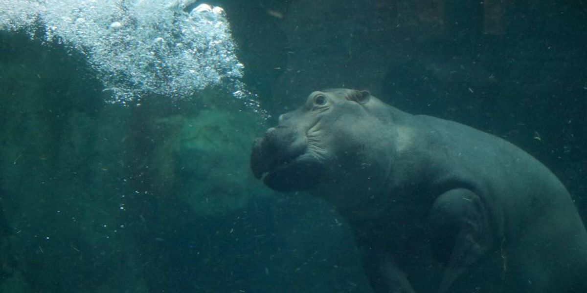Go on a 'Home Safari' and make a splash with Fiona today