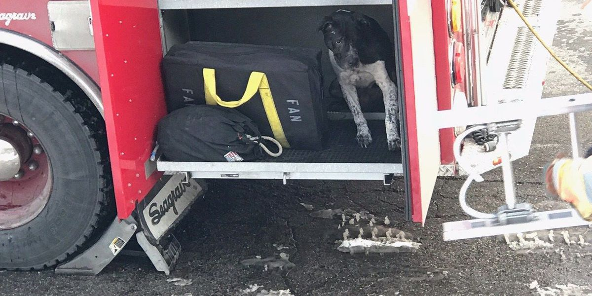 3 dogs rescued from Norwood house fire