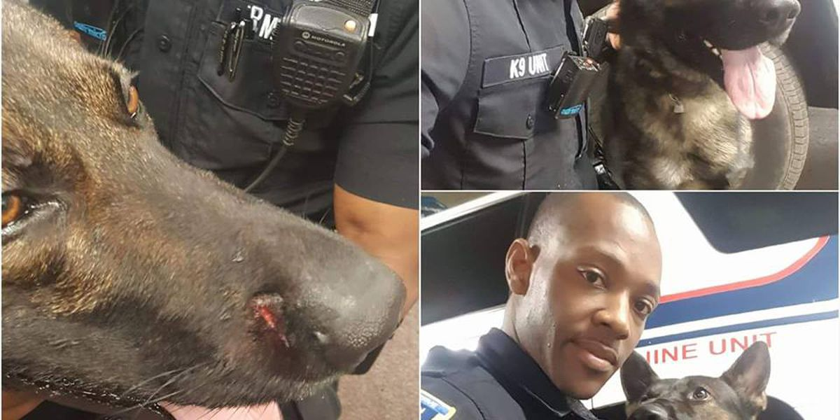 K9 officer fights off dogs to protect handler; continues tracking suspects