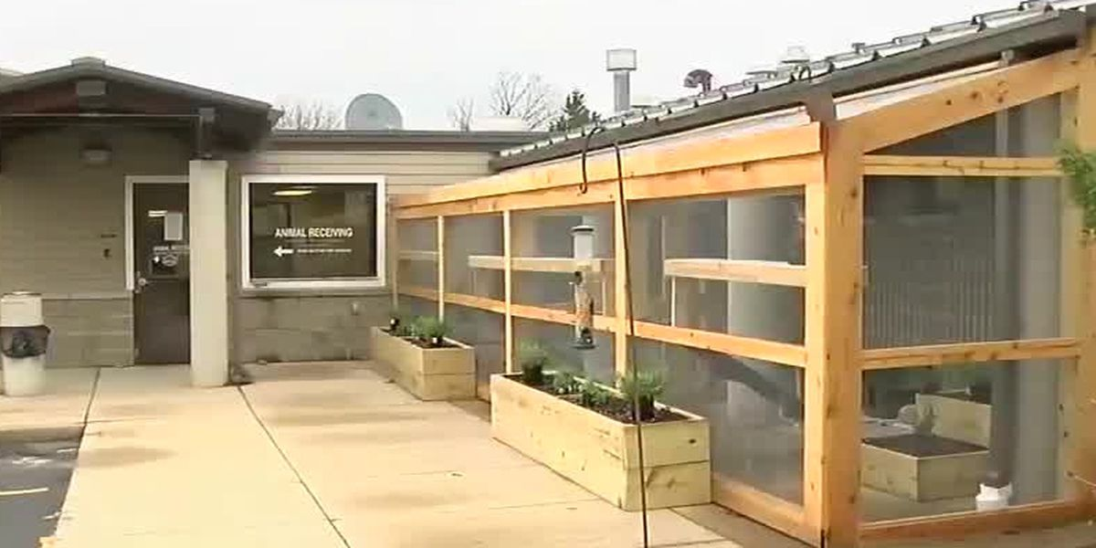 Warren County's animal shelter gets a new cat patio