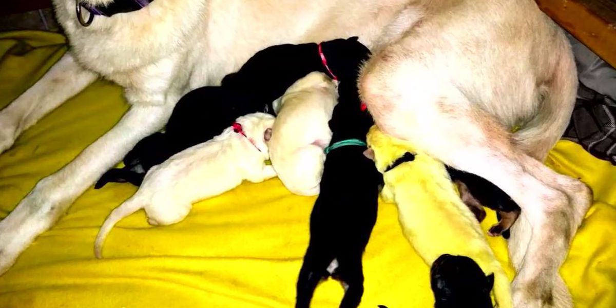 NC dog gives birth to lime green puppy who family names Hulk