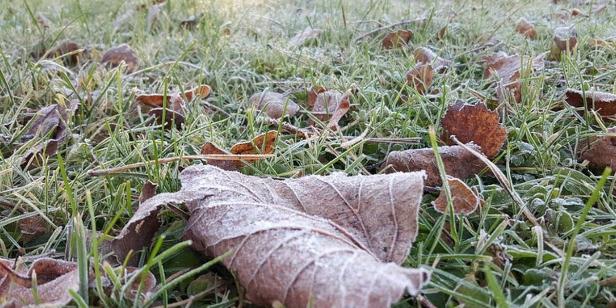 Chilly Friday, killing frost early Saturday