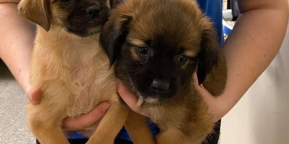 Dozens of dogs found hoarded in Warren County home now up for adoption