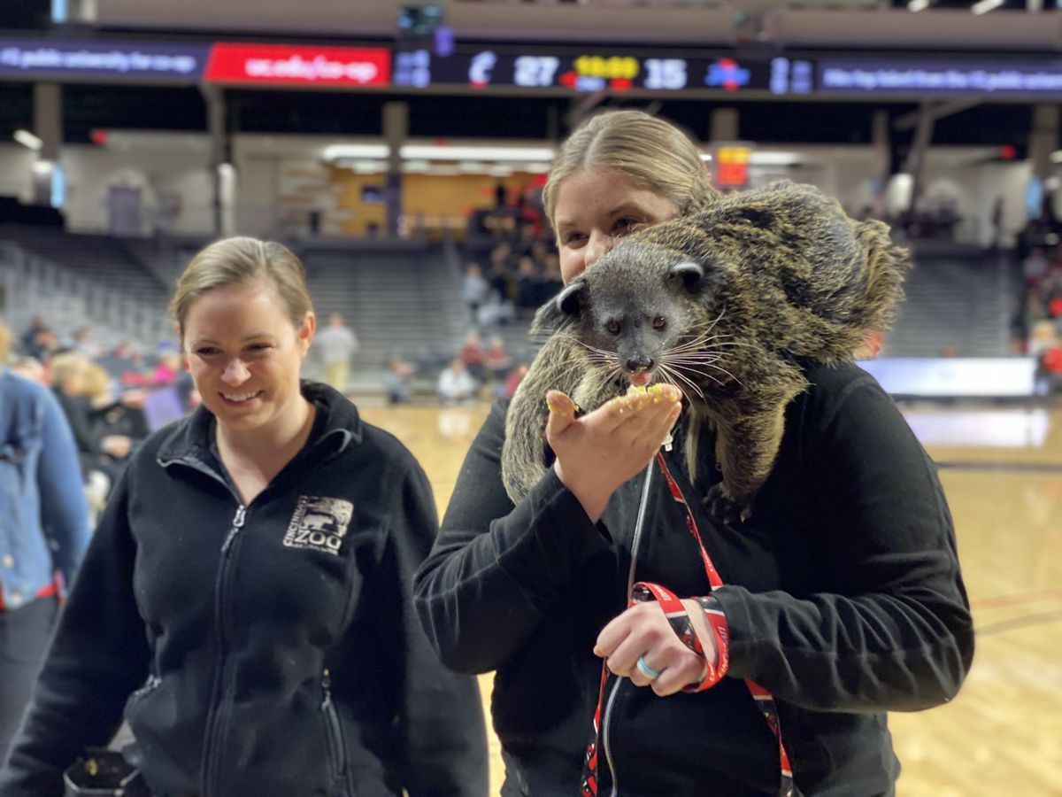 Lucille the bearcat takes in first UC basketball game