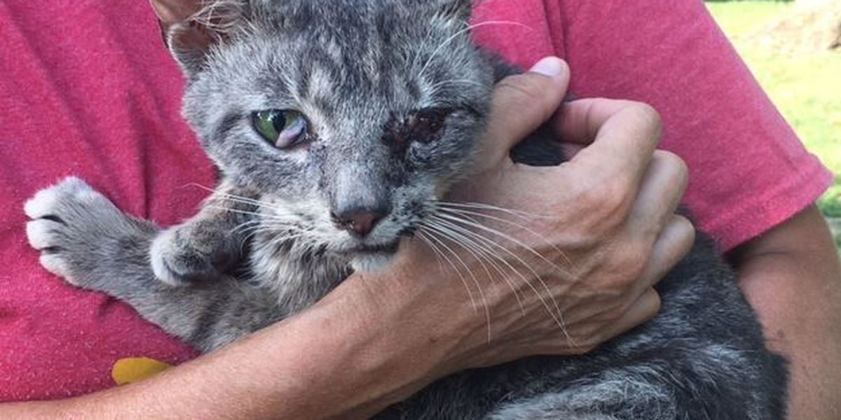 Animal rescuers launching task force after reports of children torturing animals