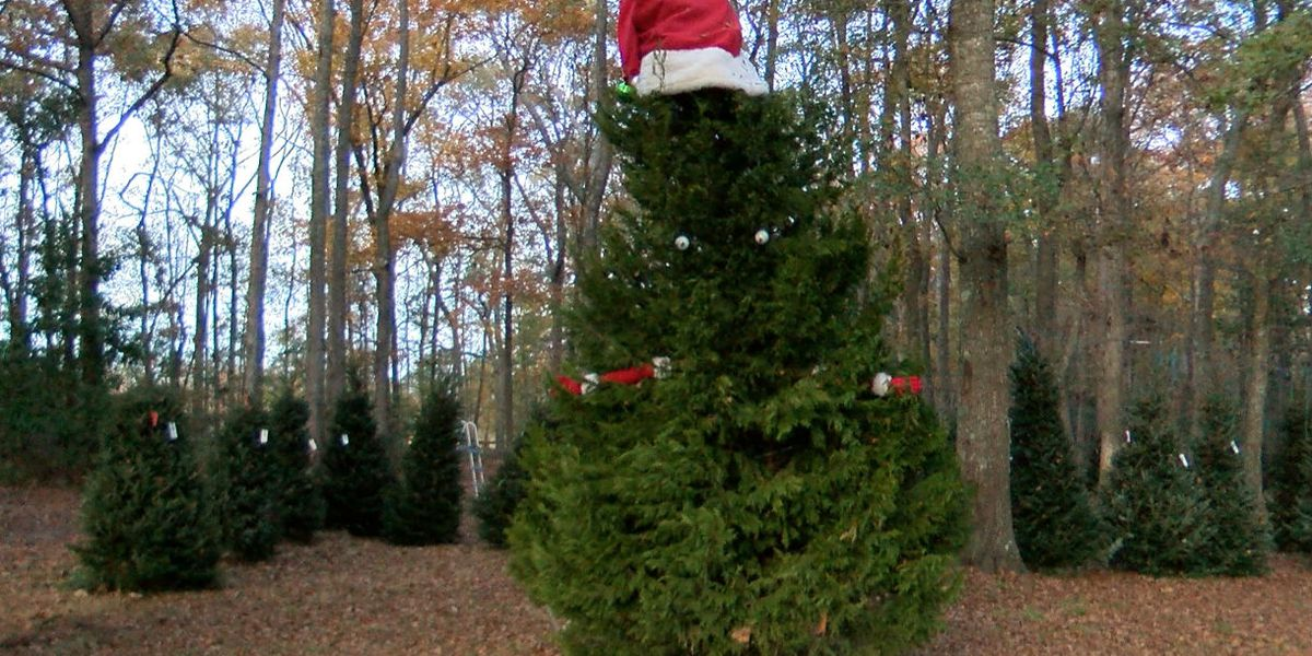 6 Places to Get a Christmas Tree in the Tri-State