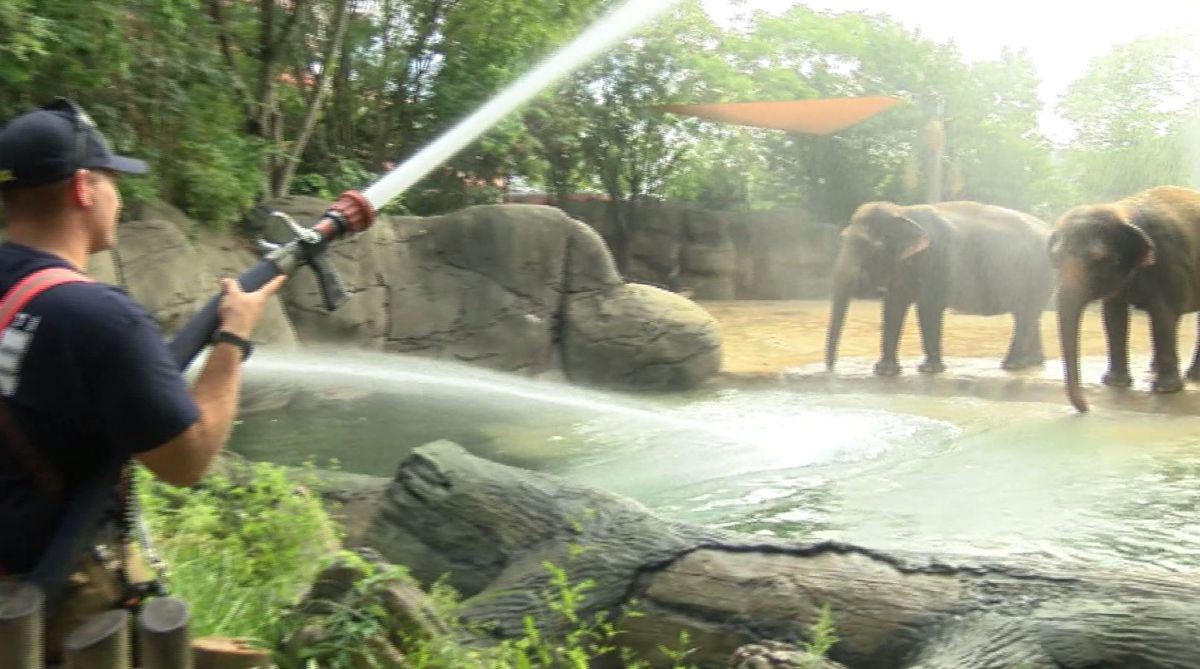 Elephants at Cincinnati Zoo & Botanical Garden get firehose bath