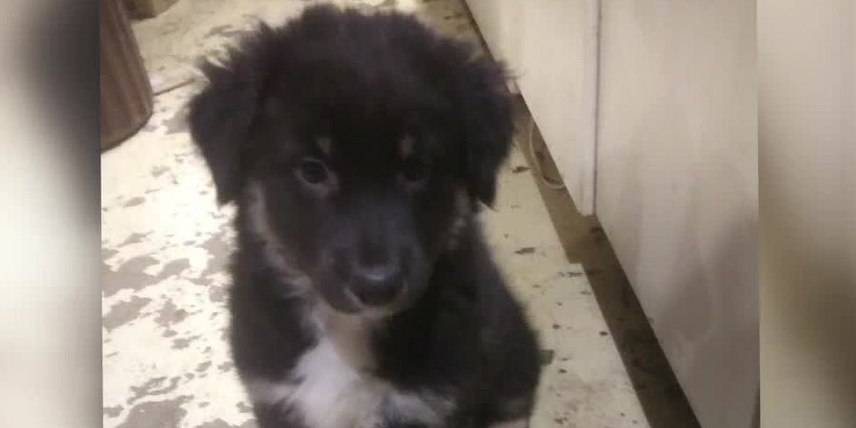 Owner says puppy taken from Camp Washington home