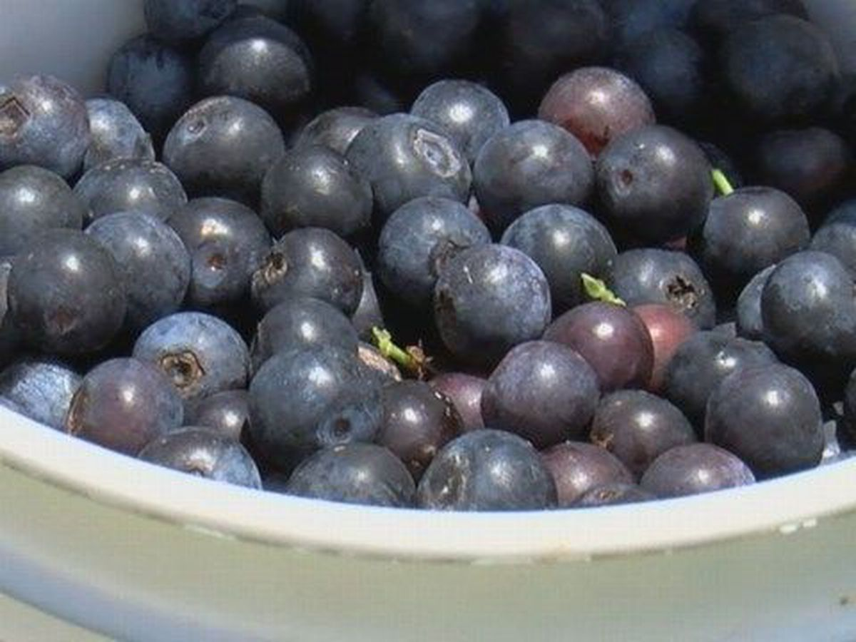 Can you blueberry your way out of depression? The evidence on dietary supplements