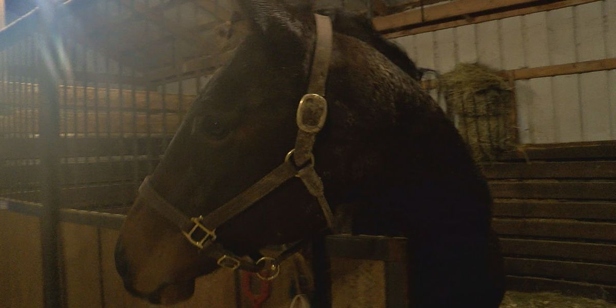 Animal rescue 'hopeful' after taking in 2 horses from Clermont Co. animal hoarding case