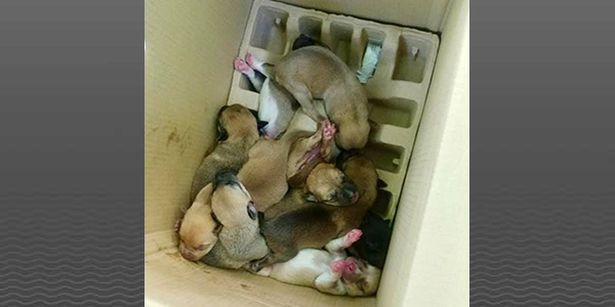 11 puppies fighting to survive after being dumped in Kentucky ravine