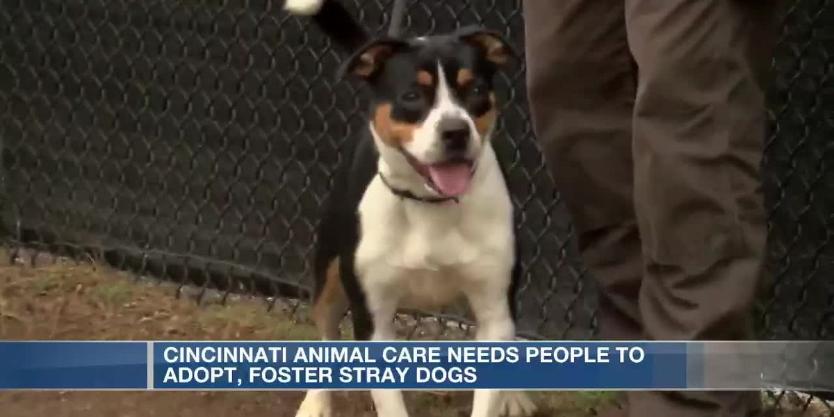 Cincinnati Animal Care hopes to find homes for hundreds of dogs