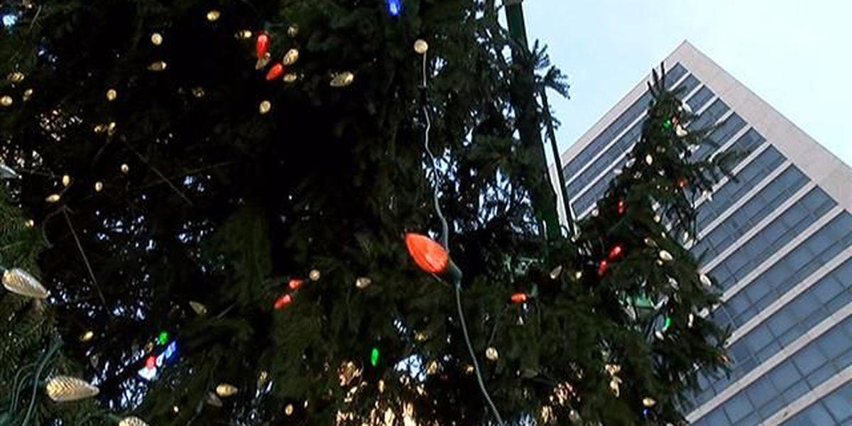 cincinnati christmas tree arrives at fountain square