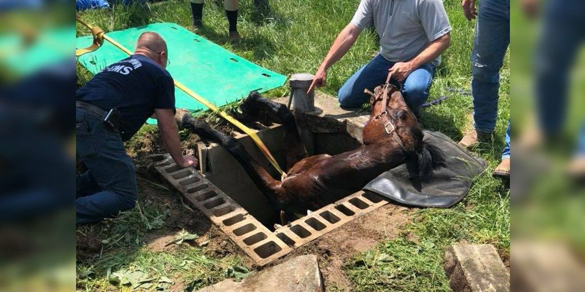 Reily Twp firefighters help rescue horse from well