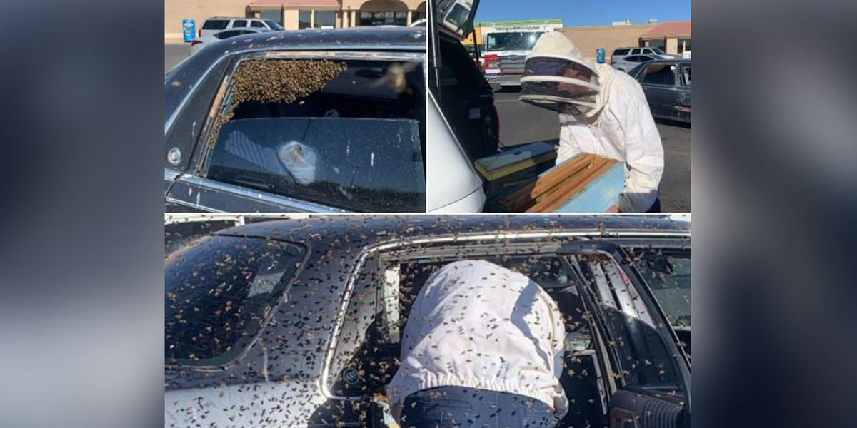 Experts called in after bees swarm backseat of car at local Enterprise