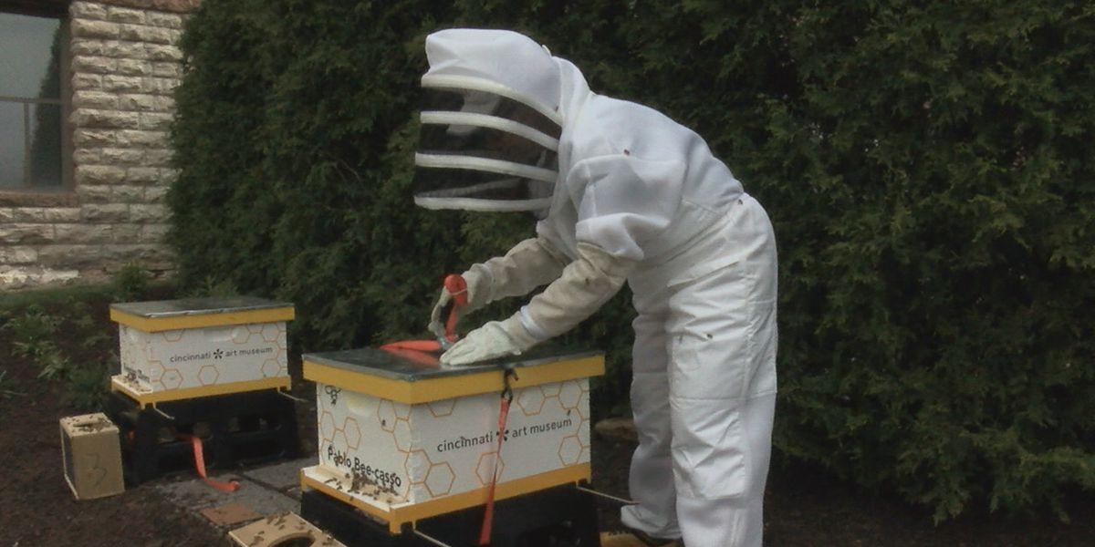 Thousands of bees make their home at Cincinnati Art Museum
