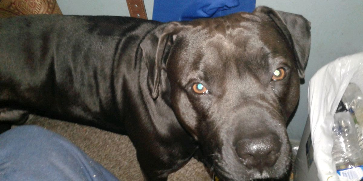 Owner of dog that killed Louisville toddler says animal 'deserves to die'