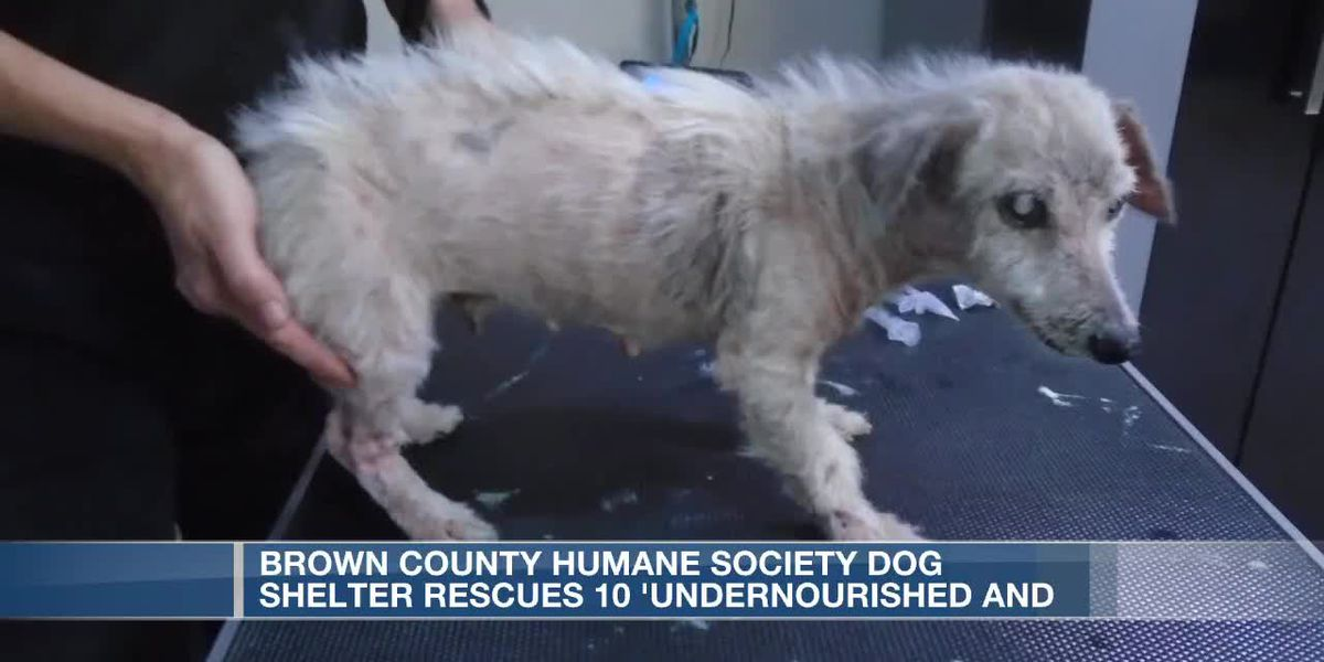 Brown Co. Humane Society Dog Shelter rescues 10 undernourished dogs