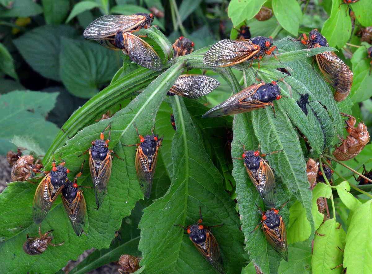 Feeling anxious about cicadas? You may not be alone