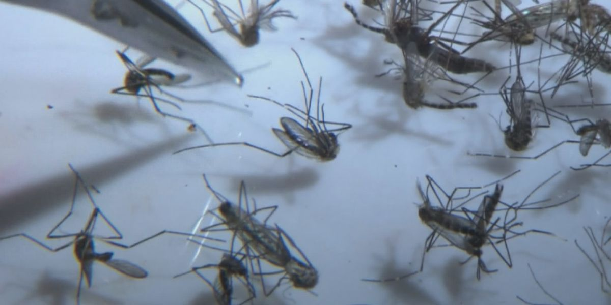 Fifth death in MI from mosquito-borne EEE infection