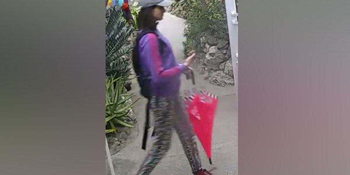 Police: Woman stole rare butterfly from Krohn Conservatory