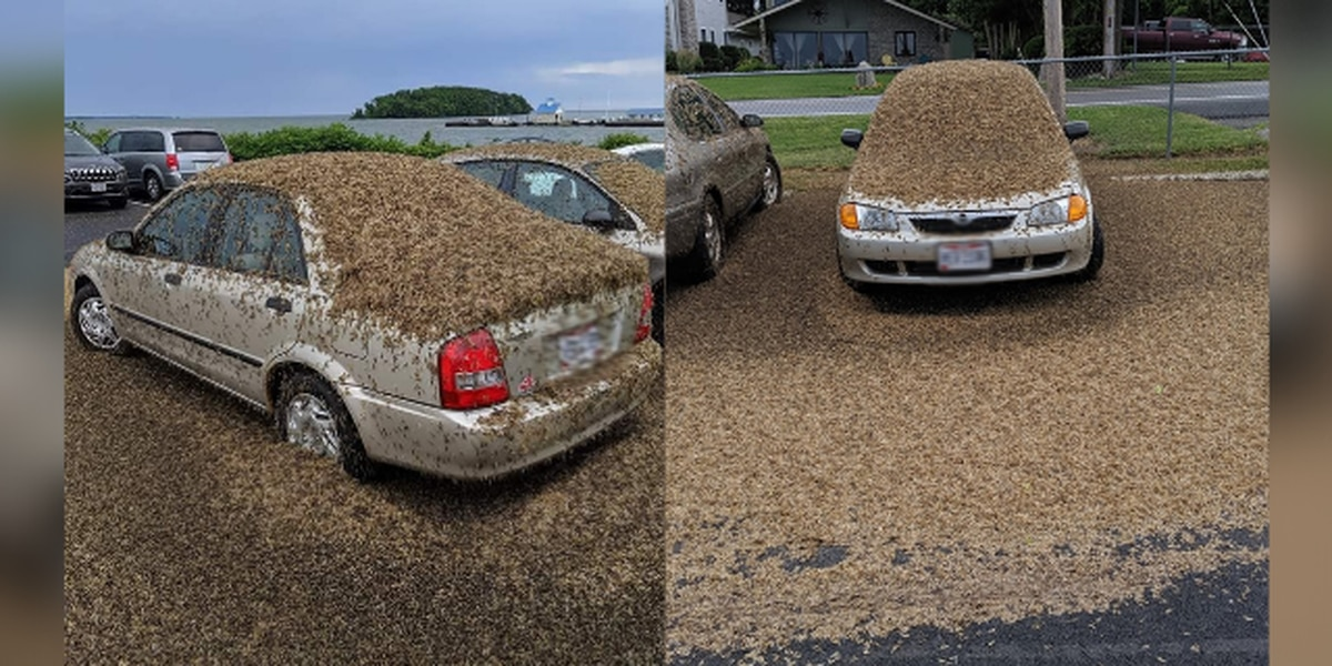 Unbelievable: Swarm of mayflies covers car near Port Clinton, Ohio