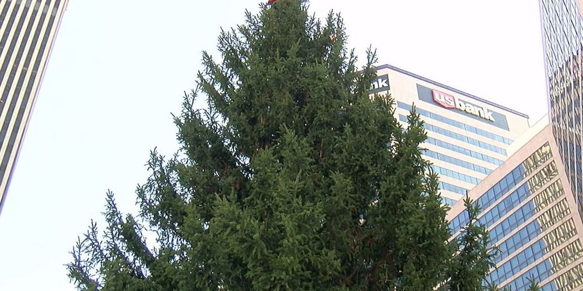 Macy's holiday tree arrives at Fountain Square