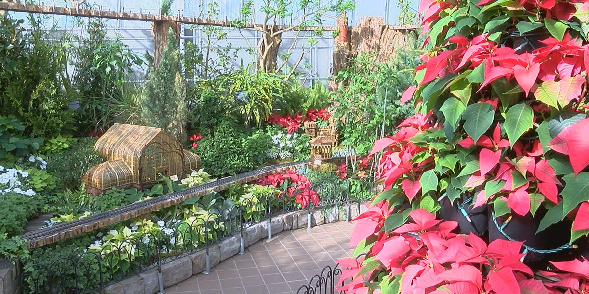 Krohn Conservatory transforms to a holiday oasis