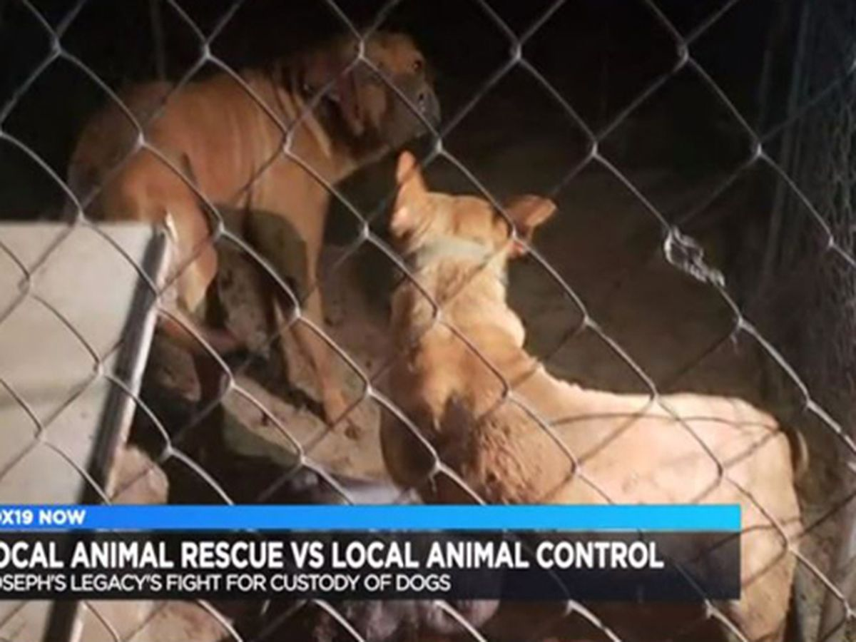 Local animal rescue fights against animal control for custody of 6 pitbull mixes