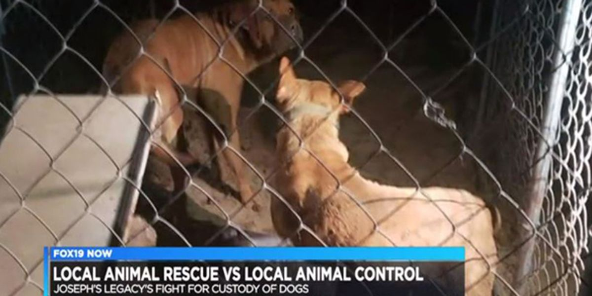 Animal rescue fights against animal control for custody of 6 pit bull mixes