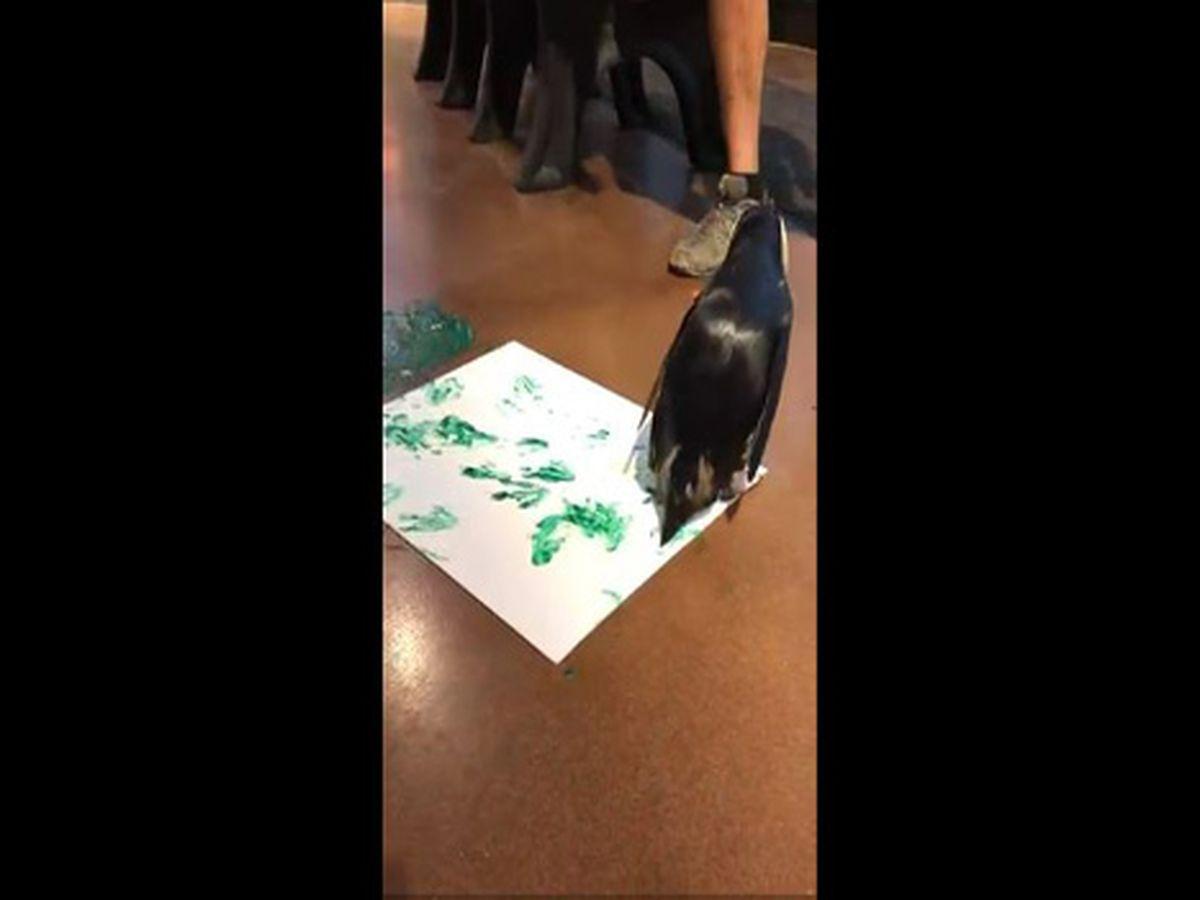 Cincinnati Zoo hosts online art auction to help animals