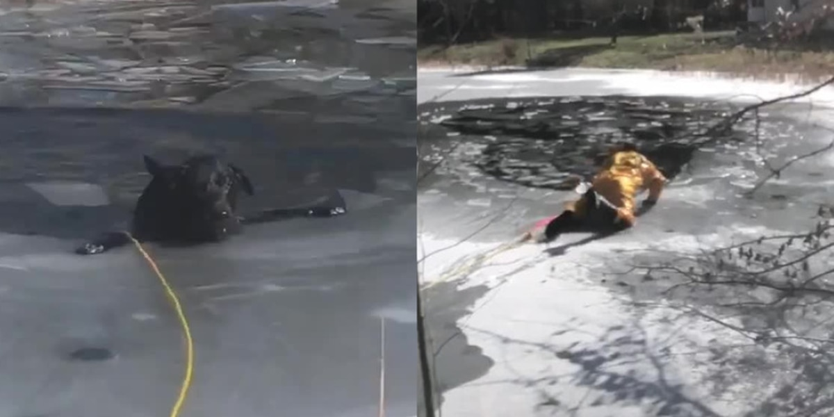 Walton Hills dog rescued from pond after falling through thin ice