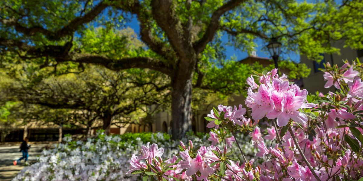 Look ahead at the upcoming Spring weather