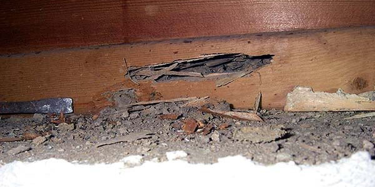 How to spot termite damage in your home