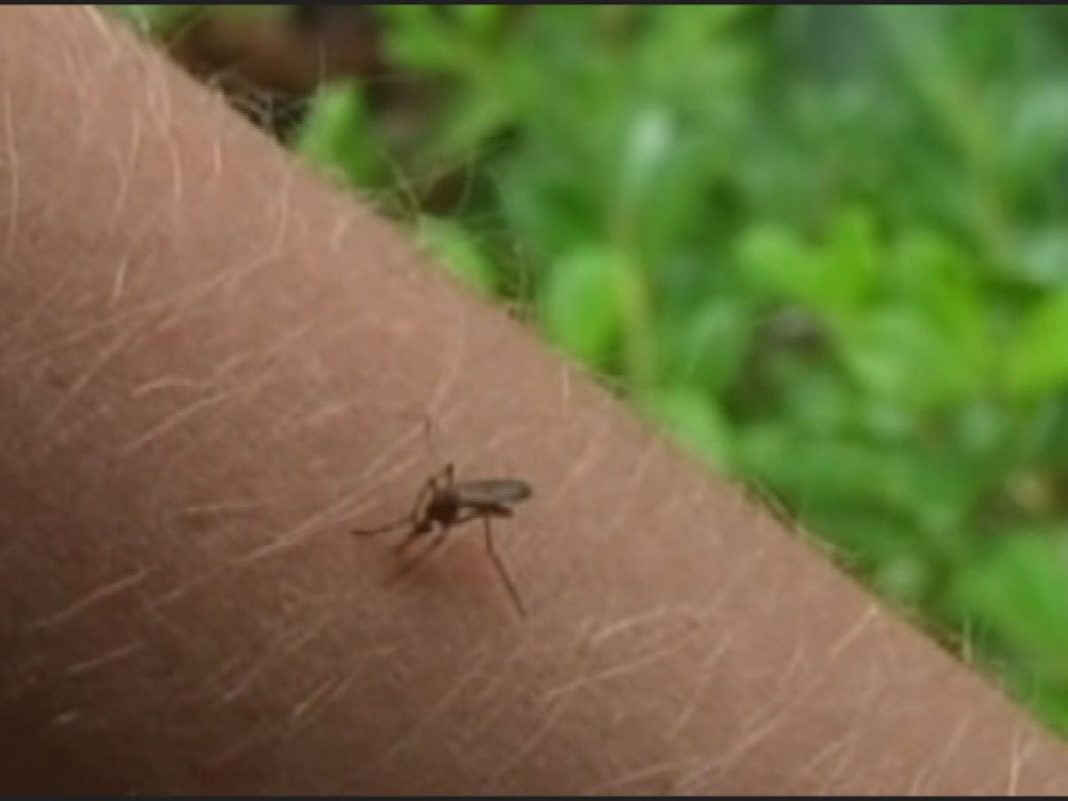 Butler Co. mosquitoes test positive for West Nile virus