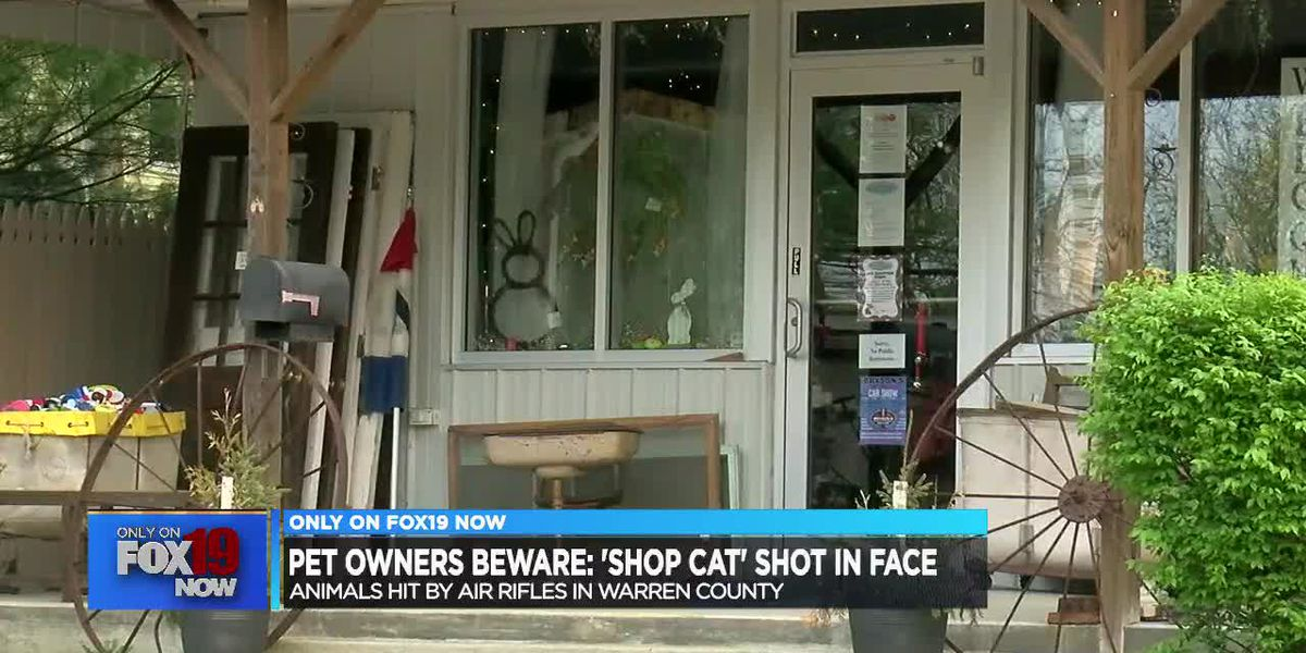 'Shop cat' shot in face