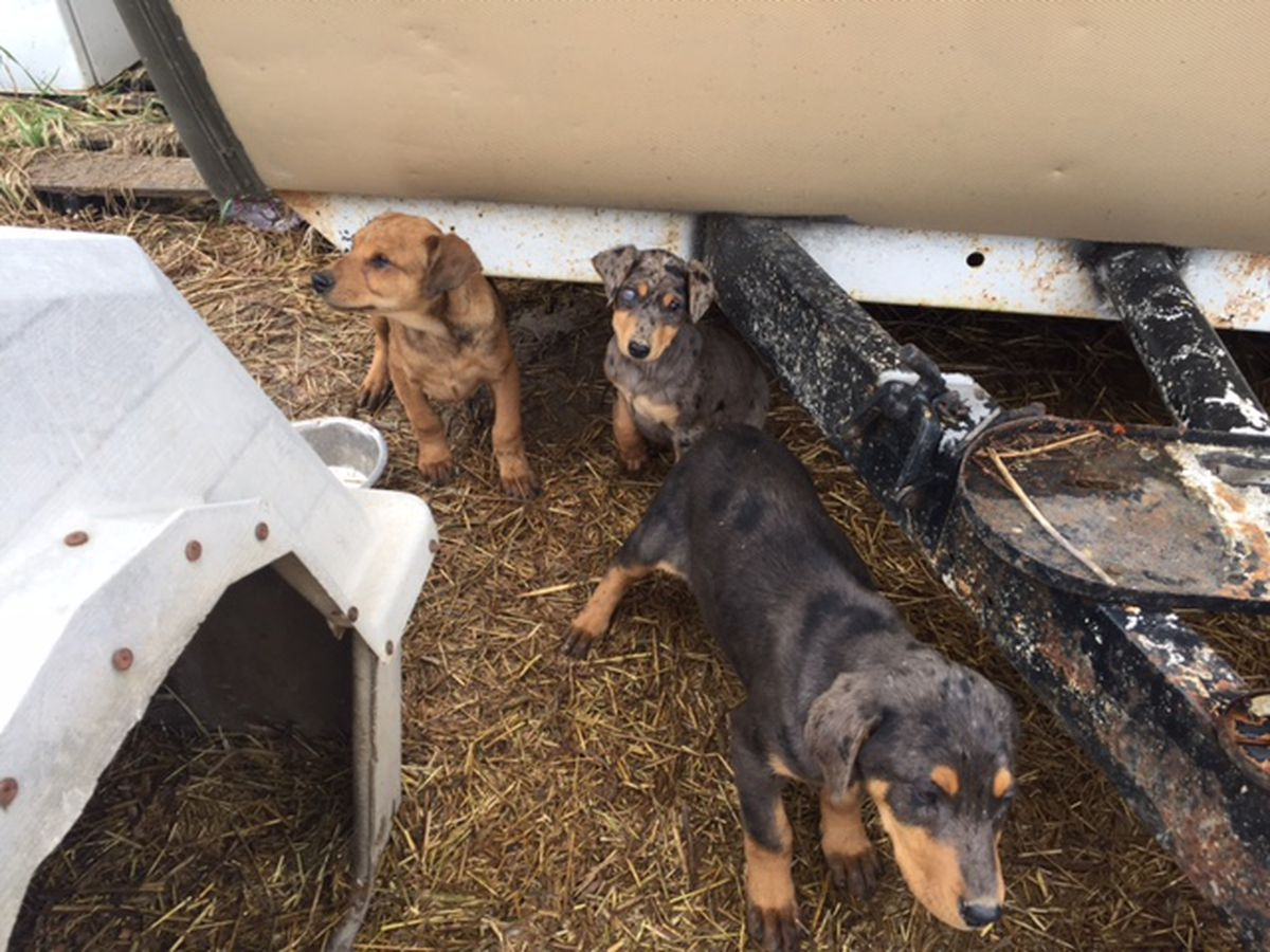 Adams Co. rescuers working to rehab dozens of animals found in hoarding situation