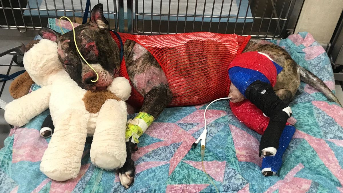 Beloved Tommie, the dog tied to pole and set on fire, dies