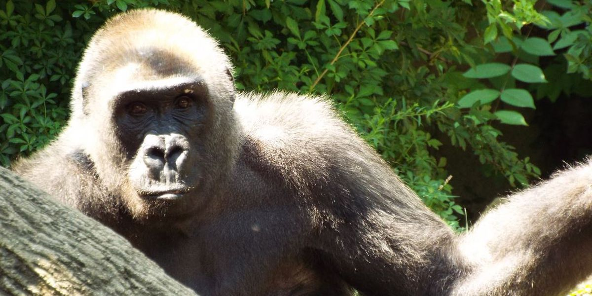 Longest living Cincinnati Zoo animal passes away at 50