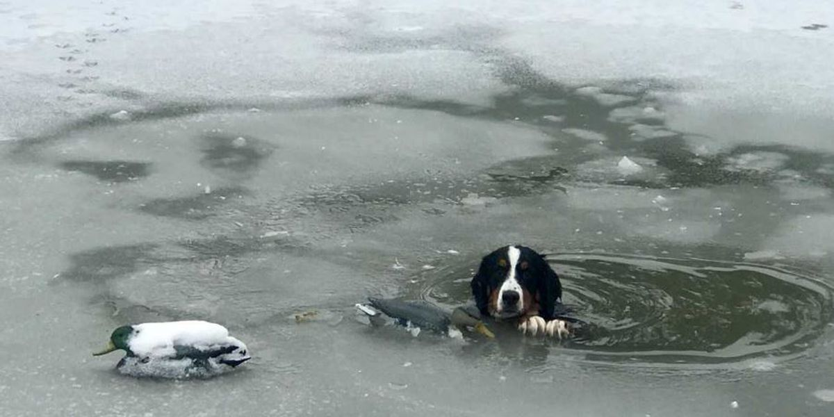 Dog rescued from icy pond in Ohio