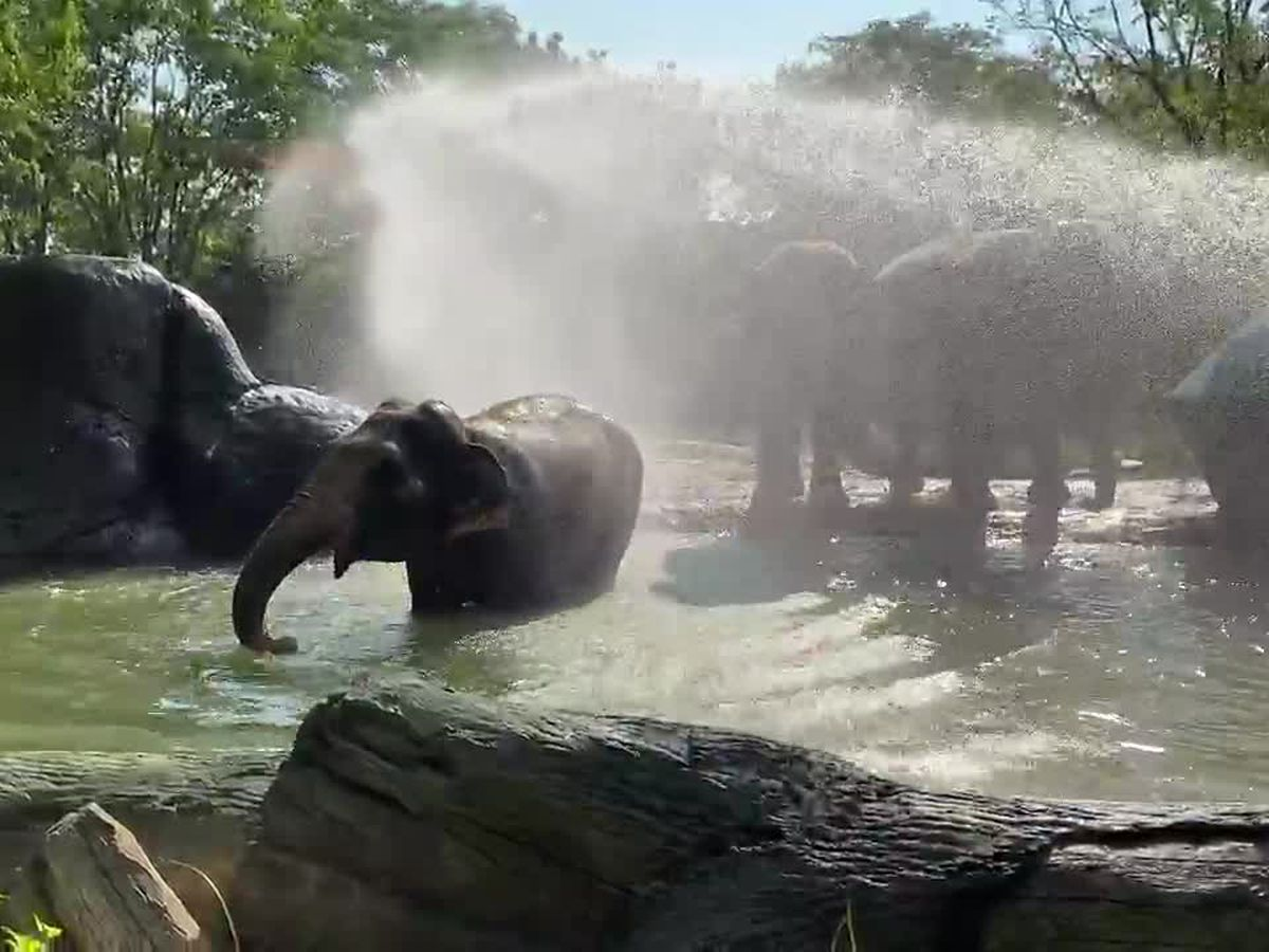 Fiona, elephants staying cool thanks to Cincinnati firefighters