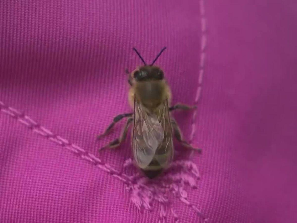 Honeybees take over New York family's home, yard
