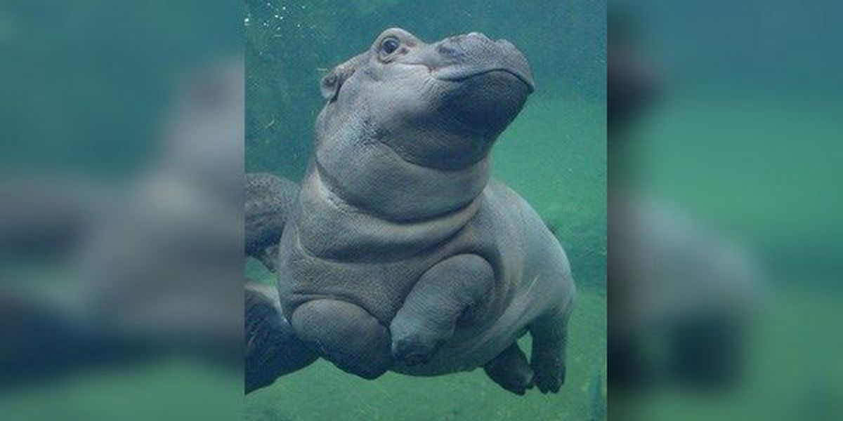 Fiona is about to turn 4: Here are some of our favorite moments