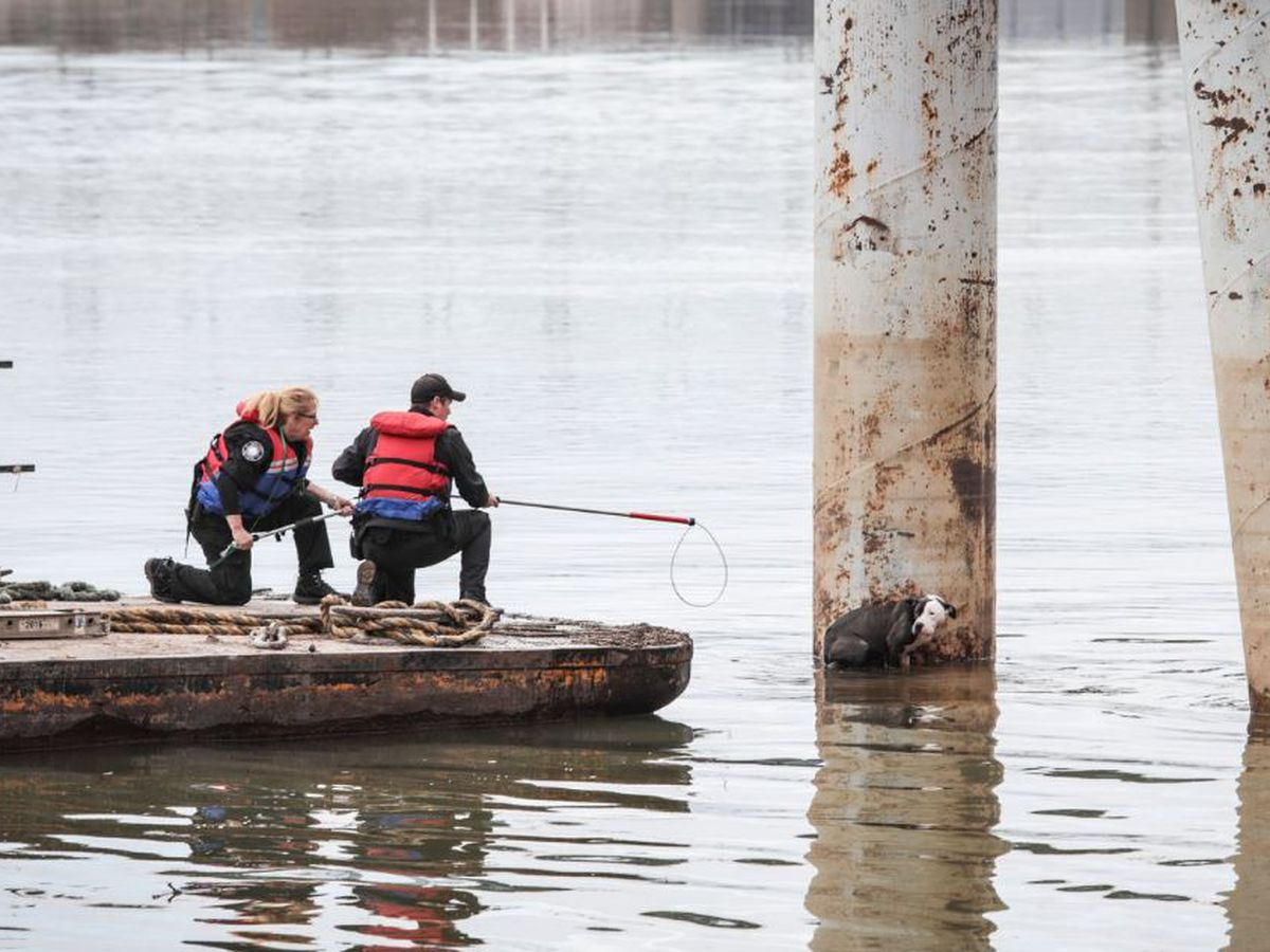 Officials rescue dog stranded in Ohio River