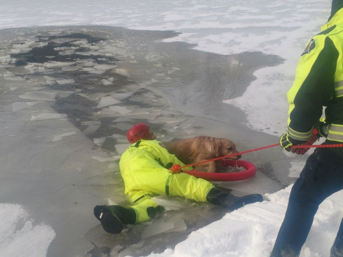 Blue Ash Fire Department rescues dog from frozen lake