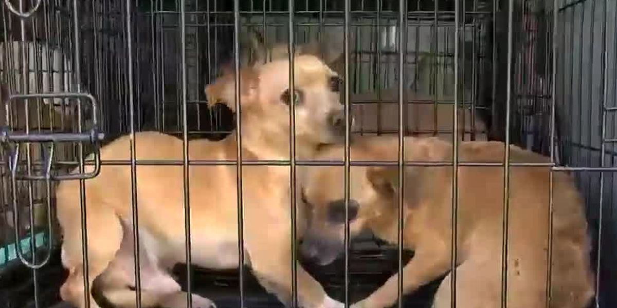 Warren County shelter rescues 56 dogs from Texas