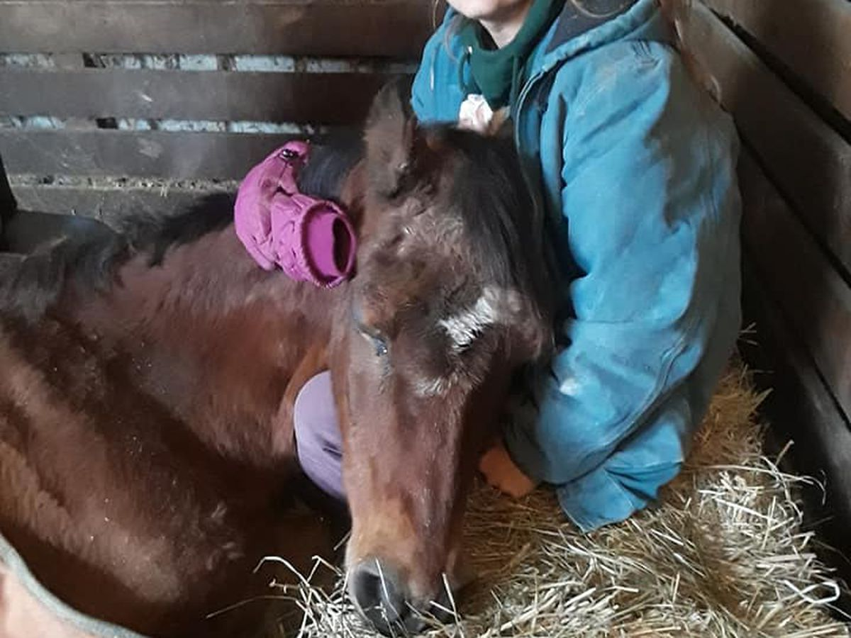Organization urges community to report abuse, neglect after rescued horse dies