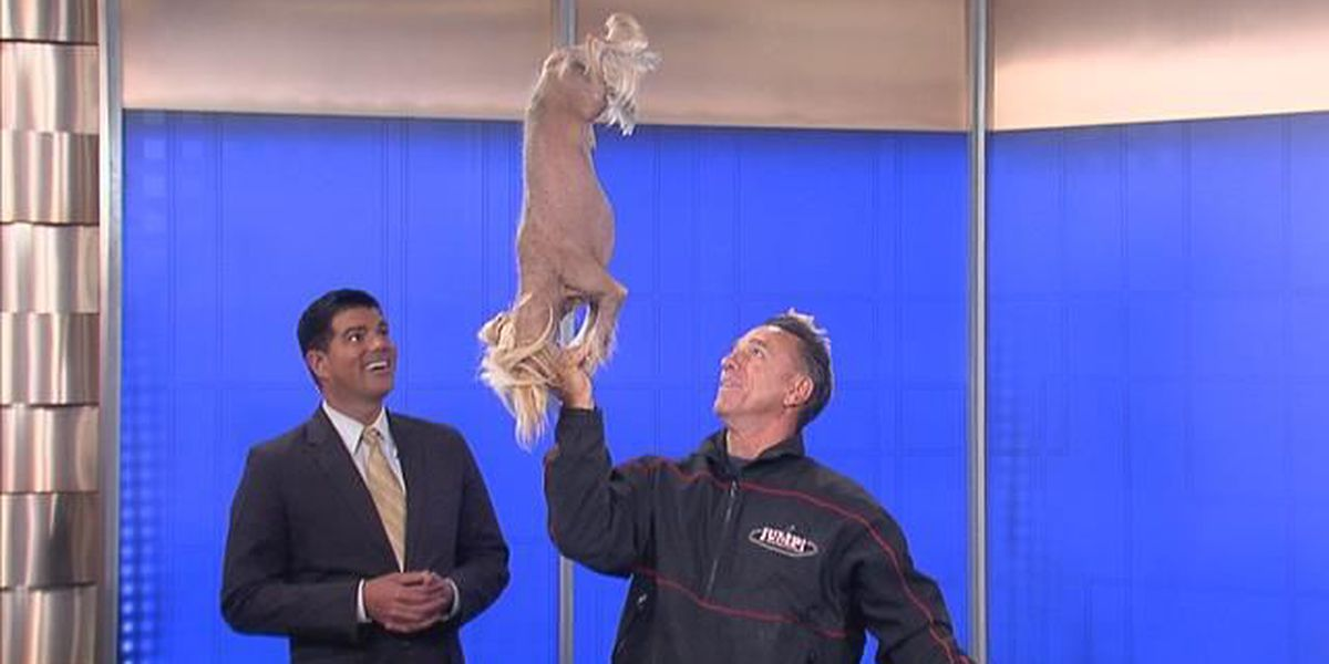 Jump! The Ultimate Dog Show opens Friday at Kings Island