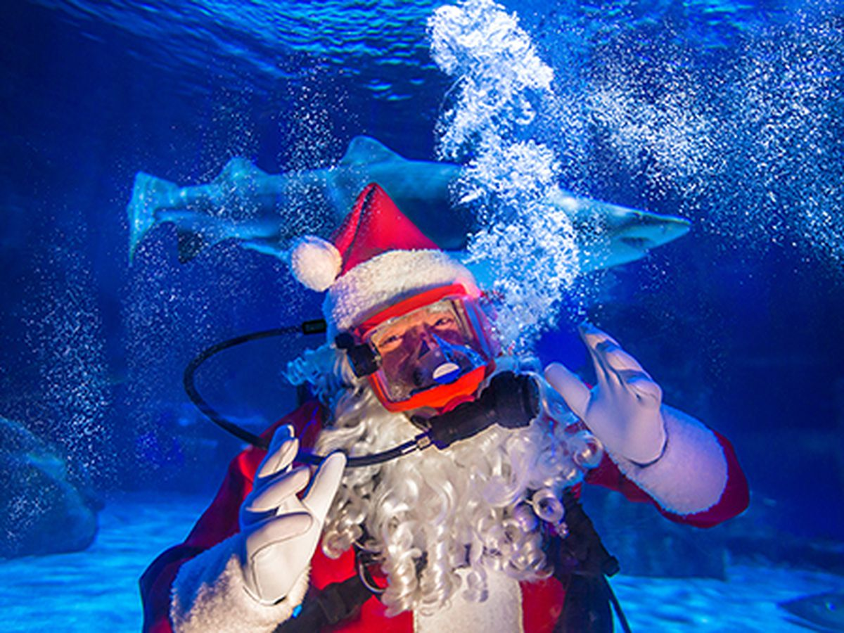 Scuba Santa returns to Newport Aquarium this year