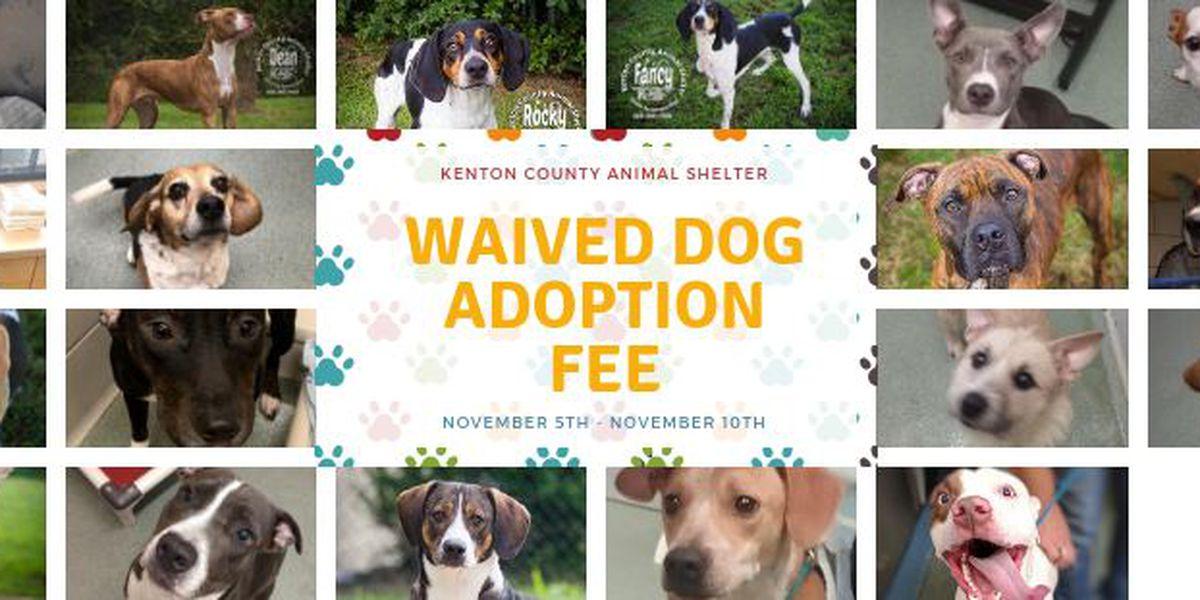 NKY animal shelter waiving dog adoption fees